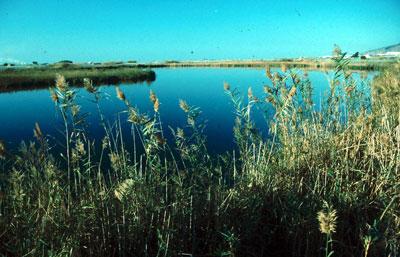Reserva Natural Albufera de Adra